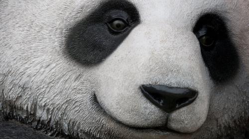 Google lanza Panda 4.1, nueva herramienta para el marketing online