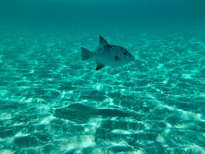 peixe num oceano