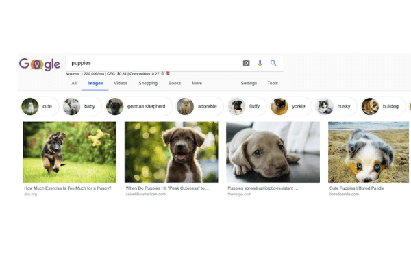 Google Image Search Puppies
