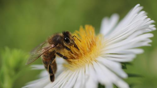 Quando i brand salvano le api