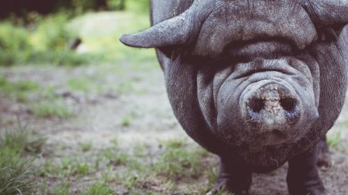 FOLLOW THE THIRD LITTLE PIG: THE QUEST FOR CLIENT AGENCY UTOPIA